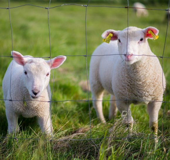 Pasture Forecaster